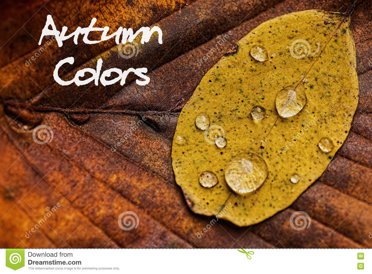 Autumn Leaves With Rain Droplets Autumn Colors Concept Wallpaper