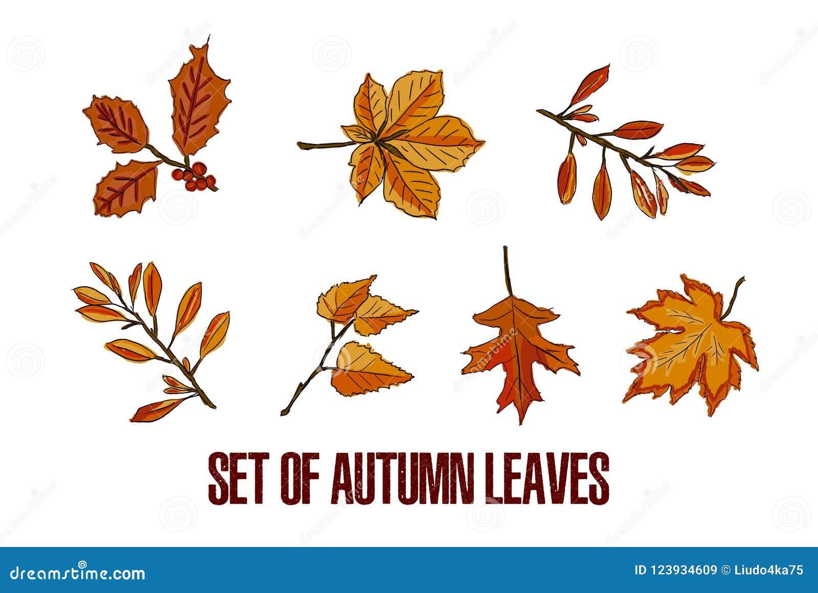 Autumn Leaves Set a isolé sur le fond blanc