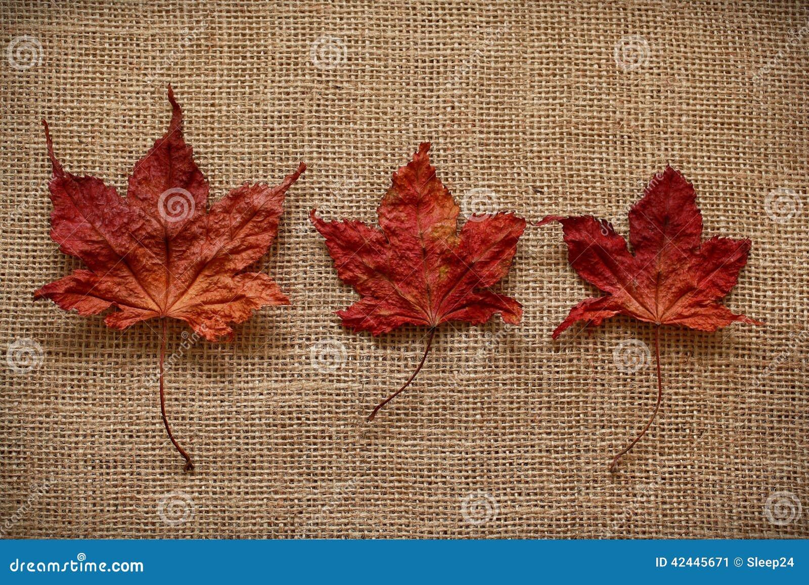 Autumn Leaves sobre fondo del yute