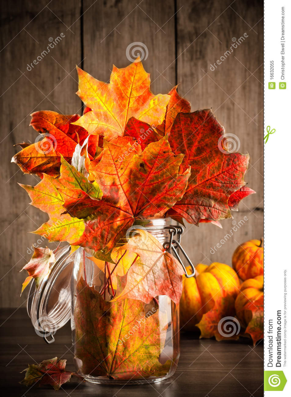 Autumn Leaves Still Life Stock Image Image Of Leaves