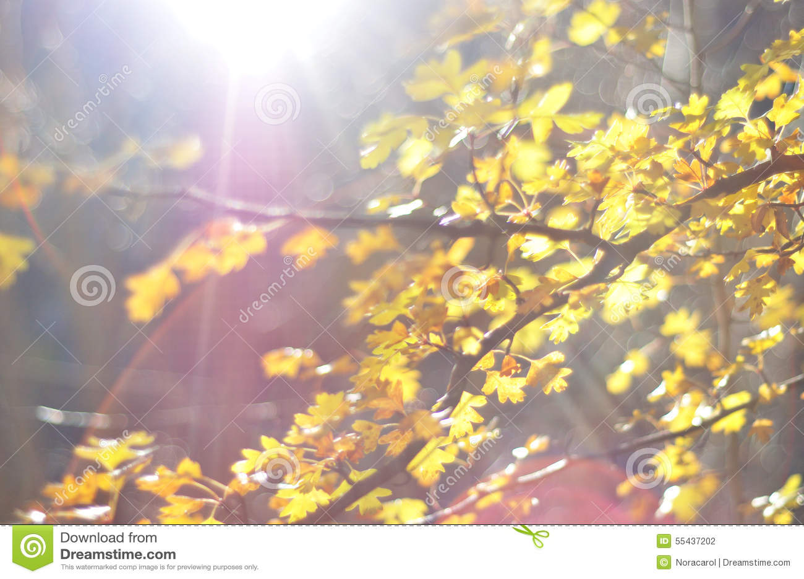 Autumn leaves with sunbeam
