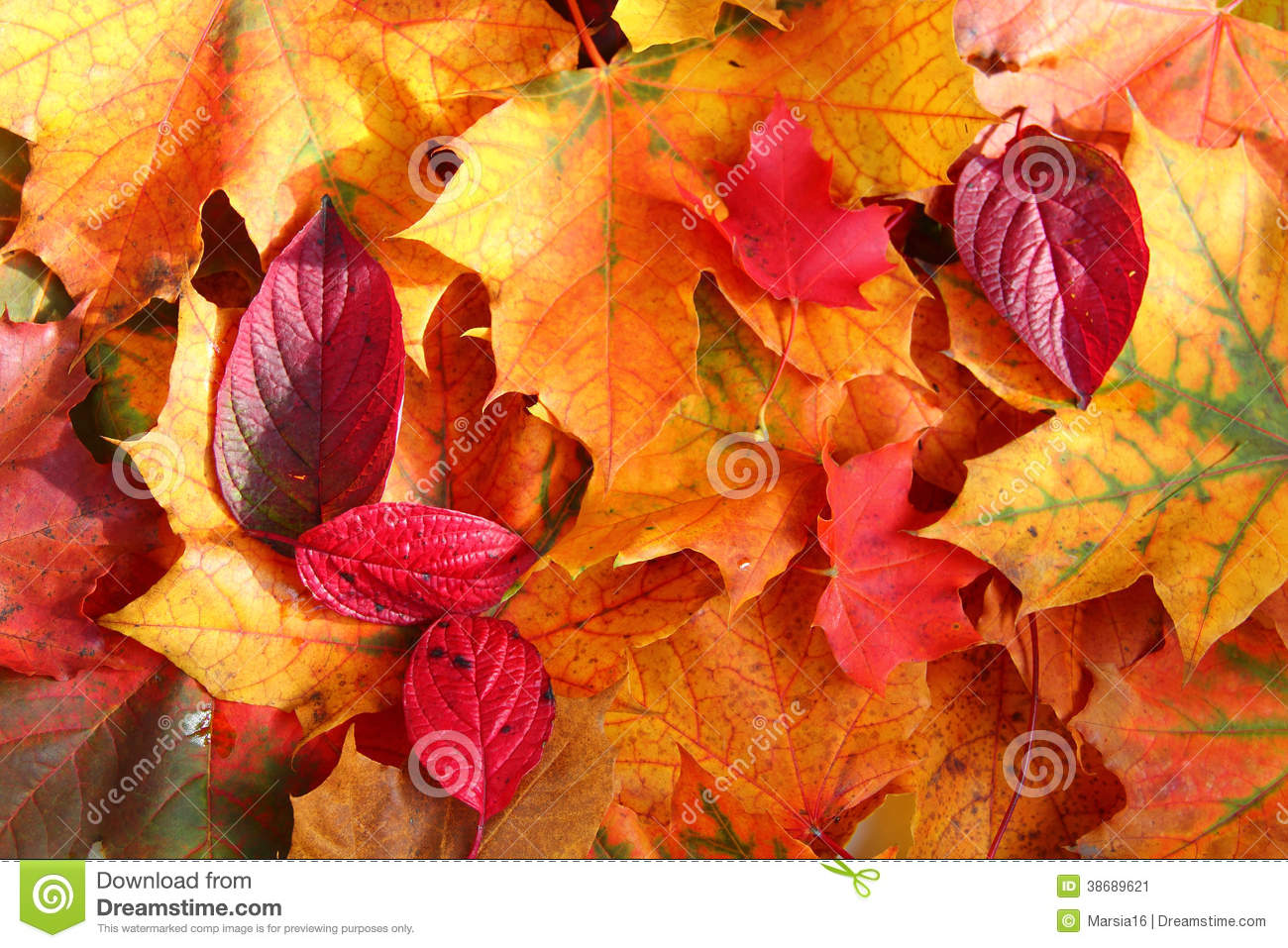 Autumn Leaves In Sunlight Stock Image Image 38689621