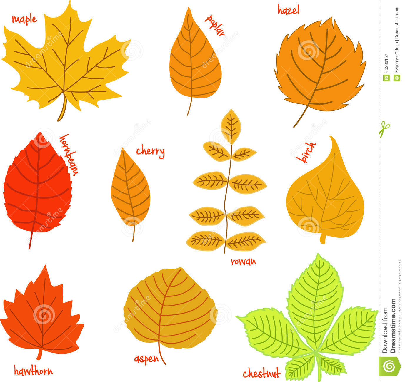 autumn leaves with their names stock photo image of fall back clip art free fall back clipart 2018