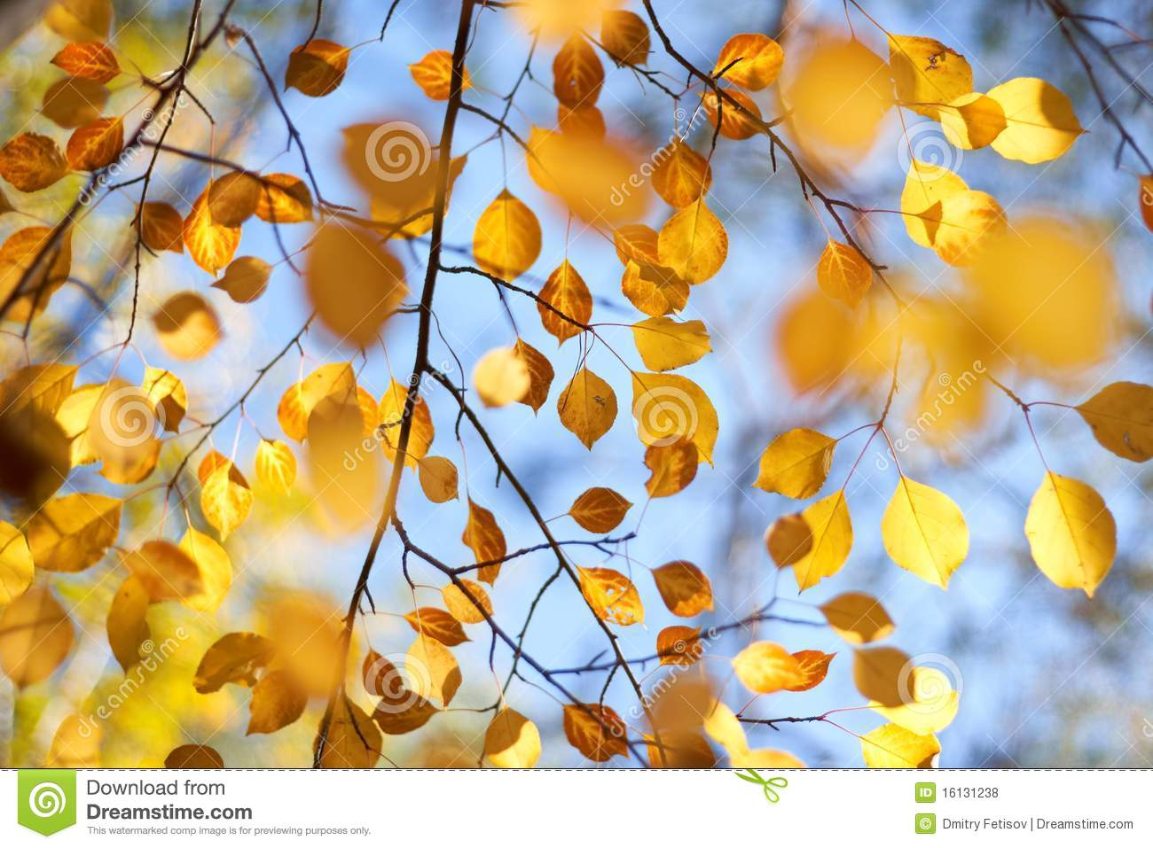 Autumn leaves on the trees