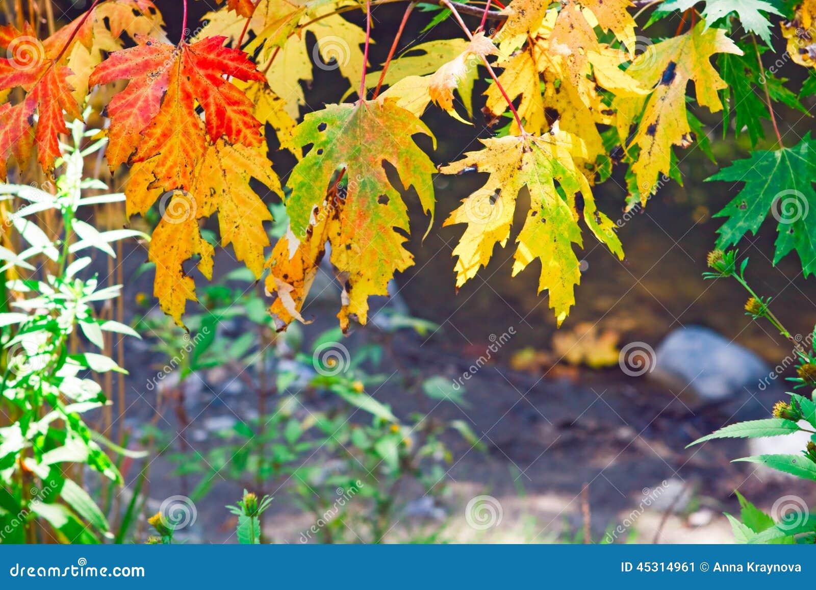 Autumn Leaves Trees Stock Image Image Of Background 45314961