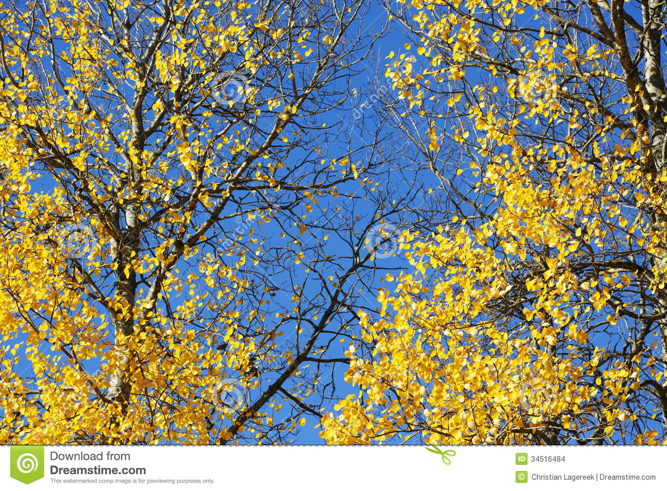 Autumn leaves and trees