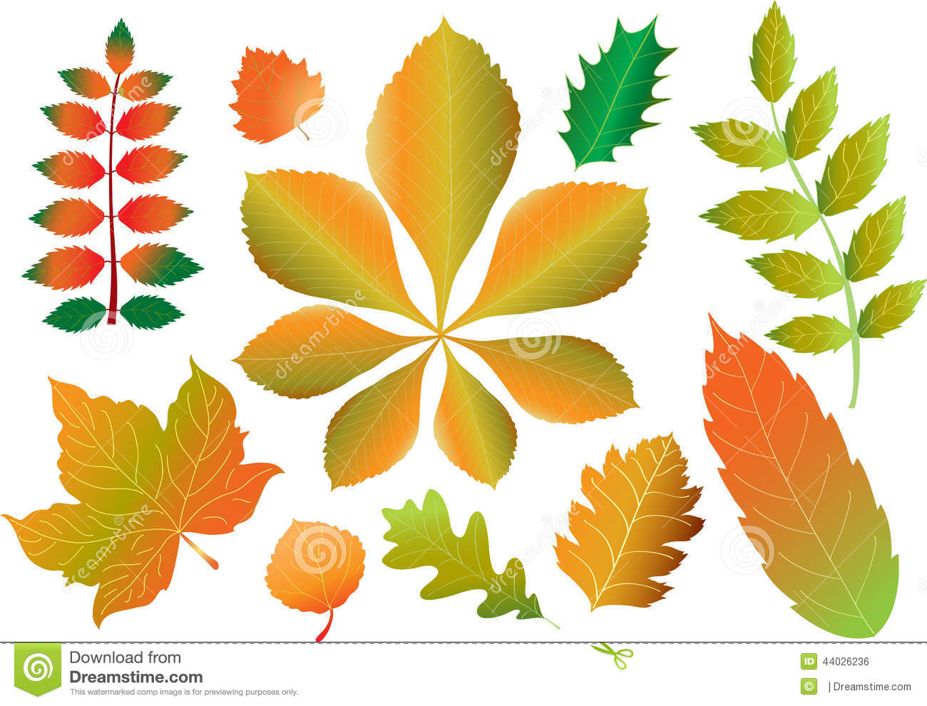 Autumn Leaves Stock Vector Image 44026236