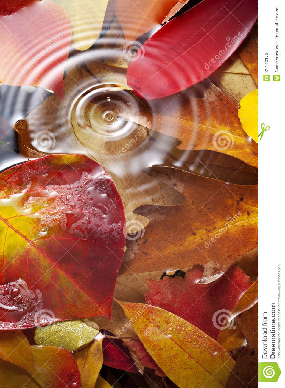 Autumn Leaves Water Drop