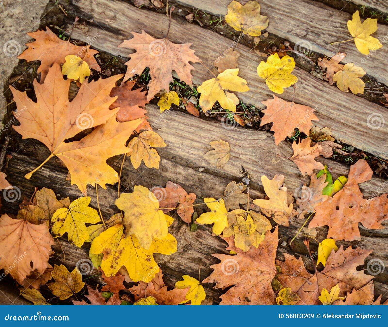 Autumn Leaves On Wood Floor Background Stock Image Image