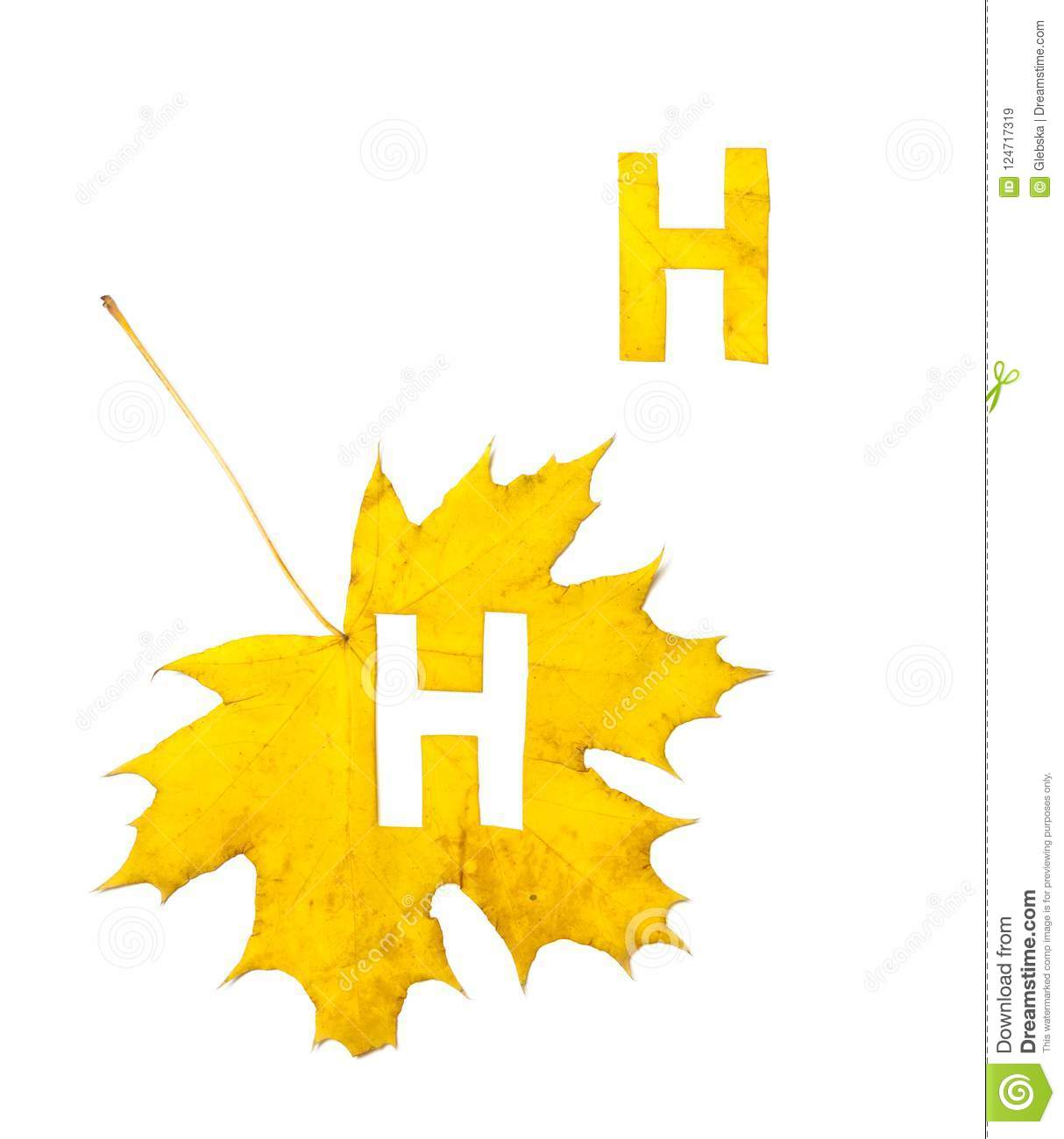 Autumn Alphabet  Letter H Is Cut From Yellow Maple Leaf