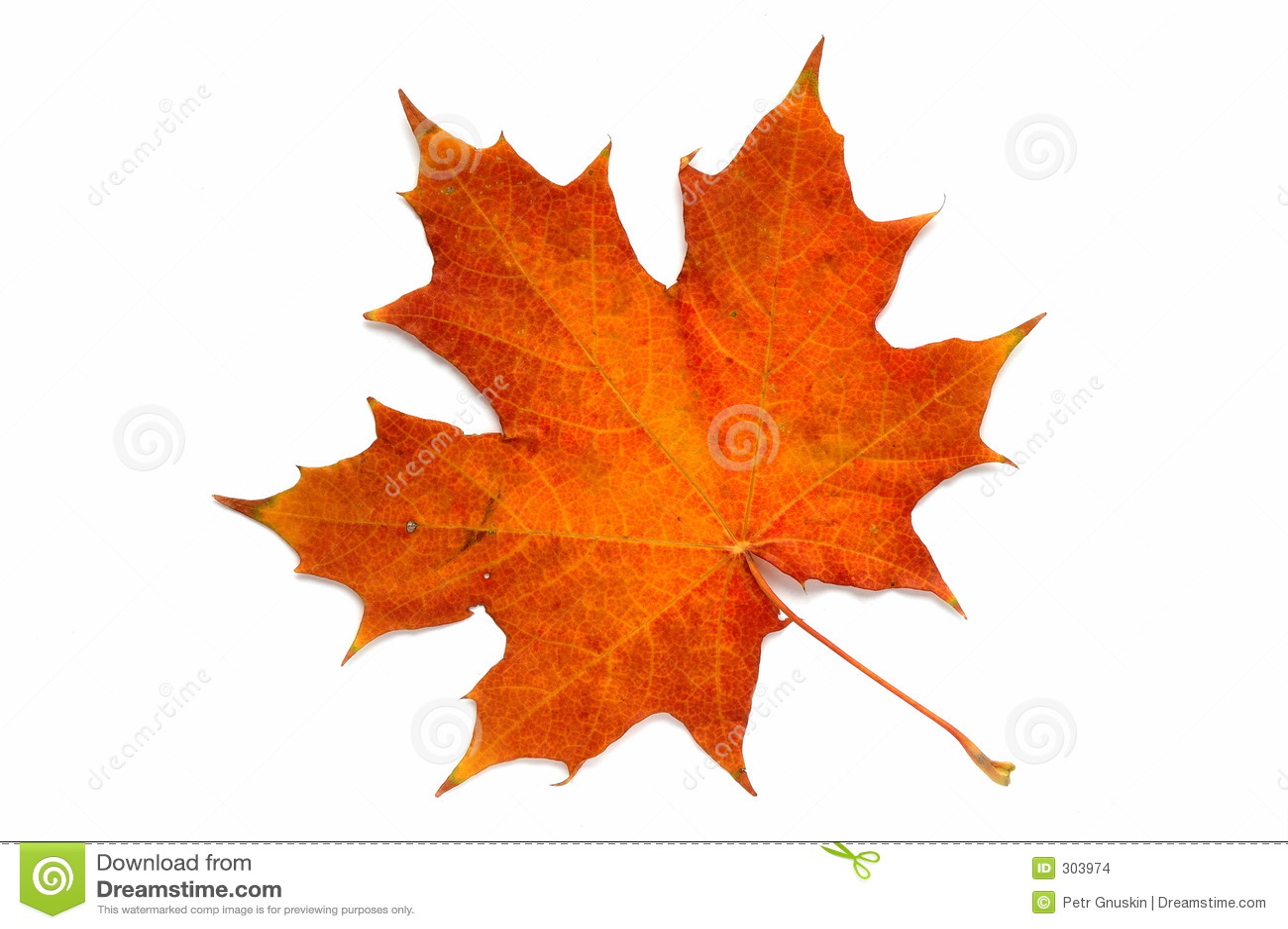 Autumn liści serii
