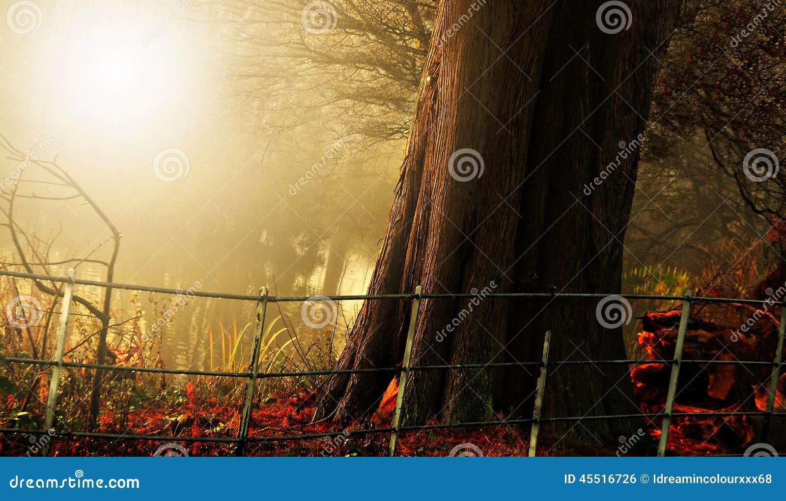 Autumn Light e cor no haampstead Londres
