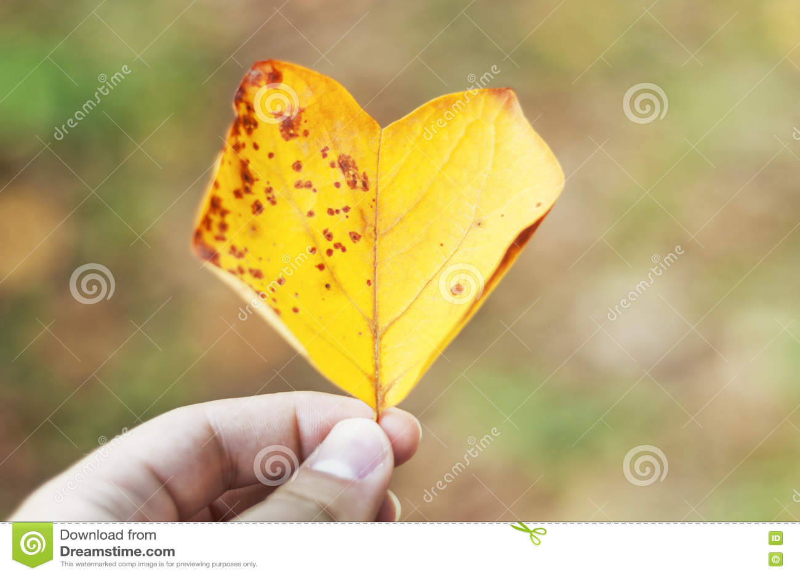 Autumn Love Feuille jaune en forme de coeur