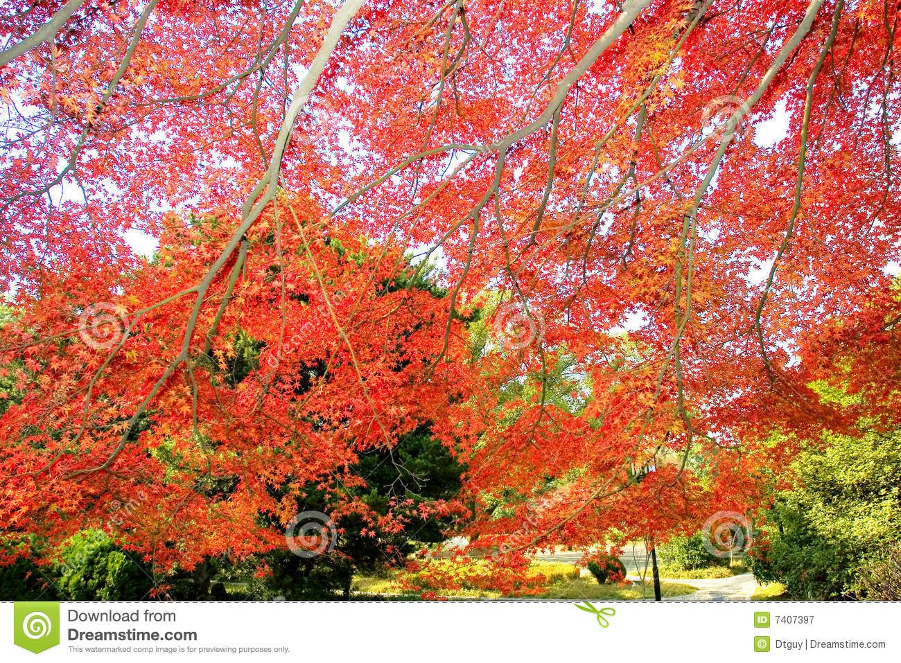 Autumn Maple Photograph By Novy additionally House On Slope also Small Log Cabin Floor Plans Also Rv Garage With Living Quarters Pleasing House Rv as well Hillside House Plans Rear View QYABqUgpKhOzeGWMgAMkSpulwwlcL5VwwgfzNjS00QI moreover Plans. on log cabin house plans steep slope