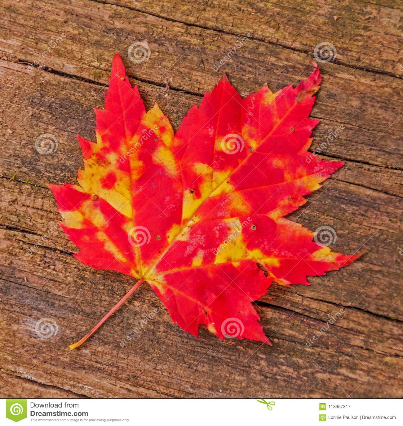 Autumn Maple Leaf auf hölzernem Hintergrund