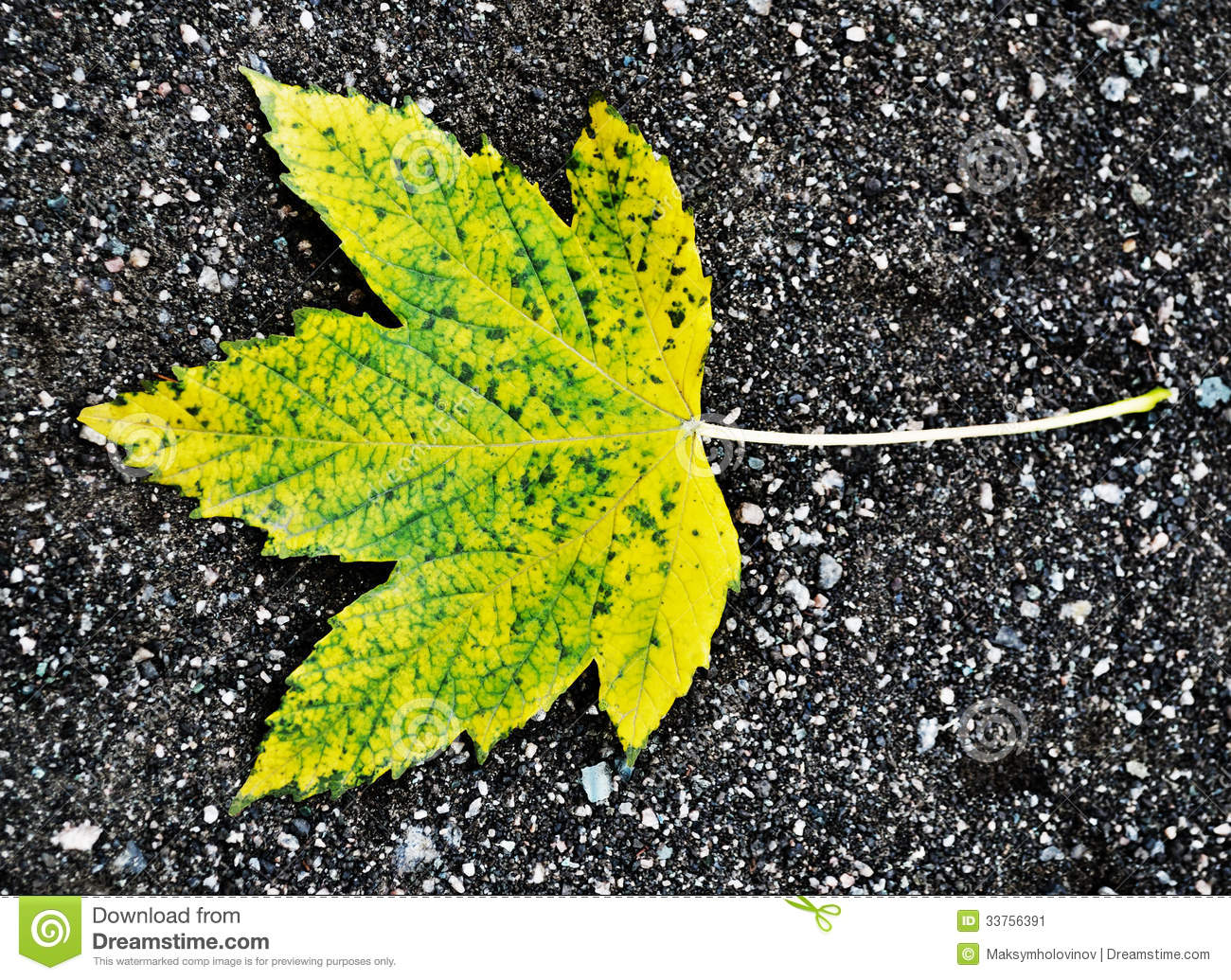Autumn maple leaf stock image image 33756391 for Soil yellow color