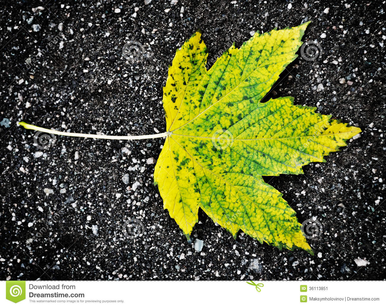 Autumn maple leaf stock image image 36113851 for Soil yellow color