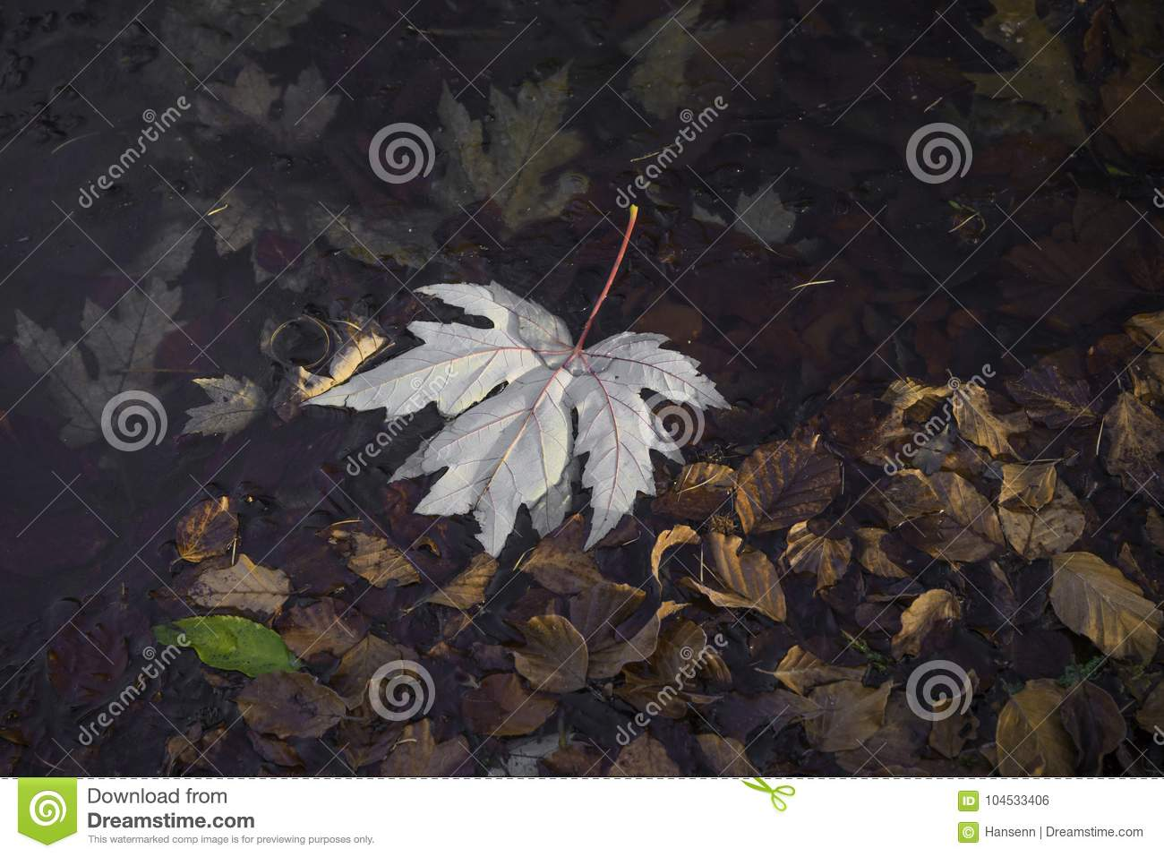 Maple leave in water