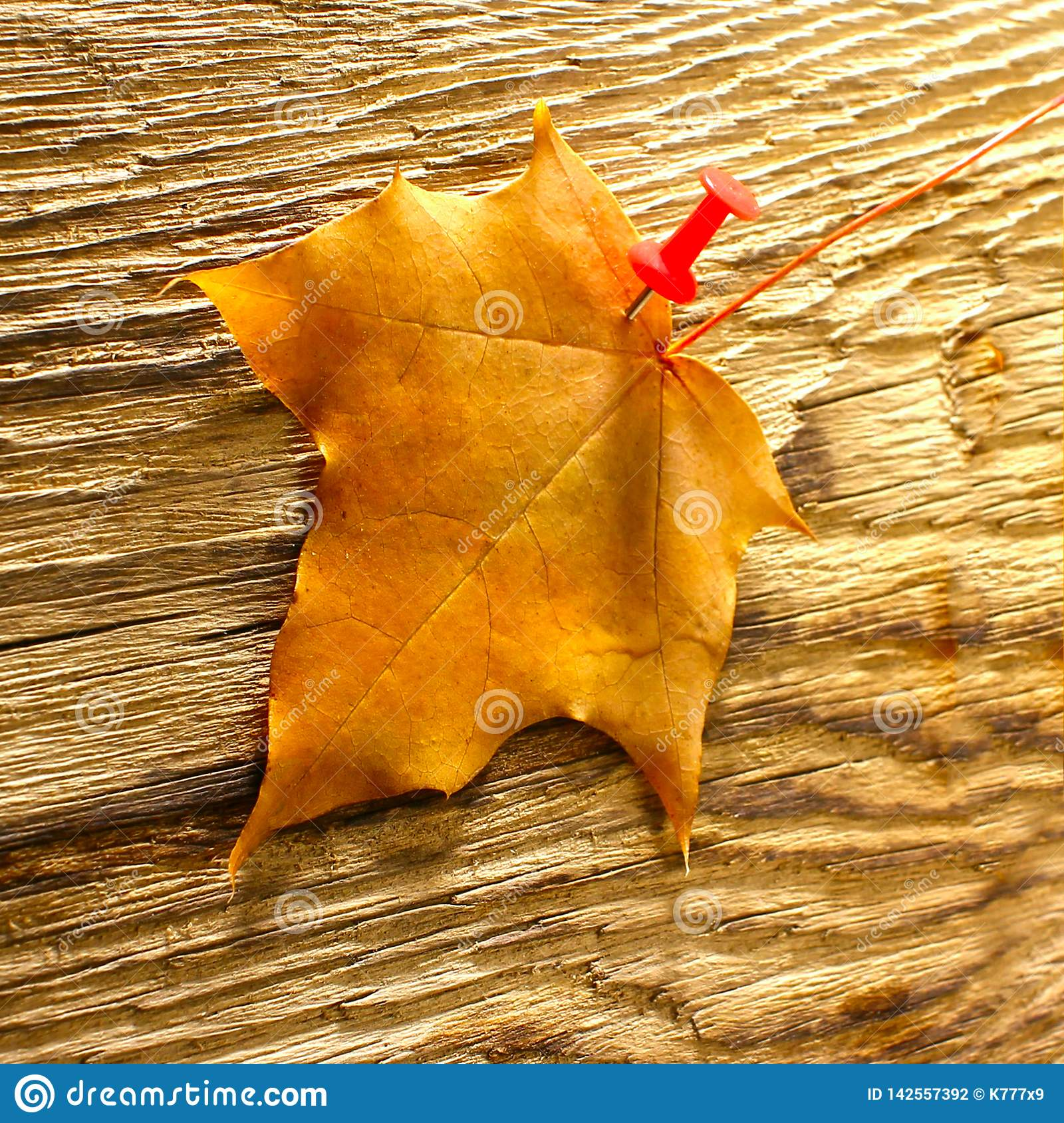 Autumn maple leaves clipart on wooden table.Falling leaves natural background