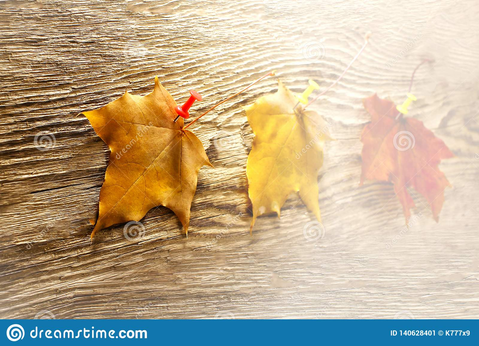 Autumn maple leaves clipart on wooden table.Falling leaves natural background. toned
