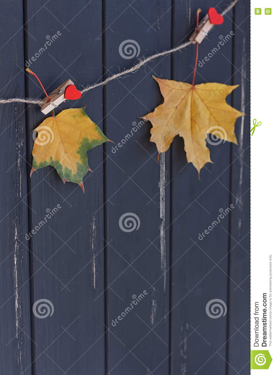 Autumn Maple Leaf On A Clothes Line Stock Image ...