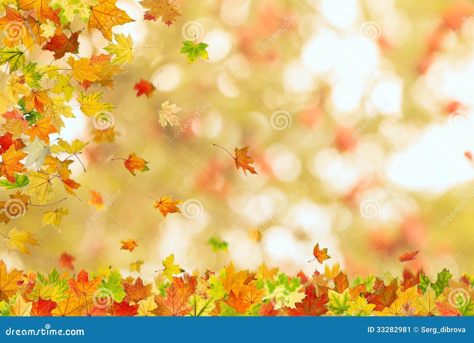 Autumn Maple Leaves Falling Stock Image Image 33282981