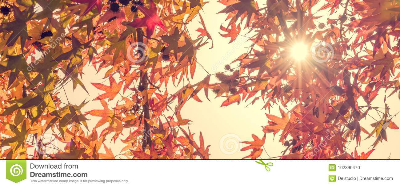 Autumn maple leaves with sunbeam, forest in autumn, vintage process