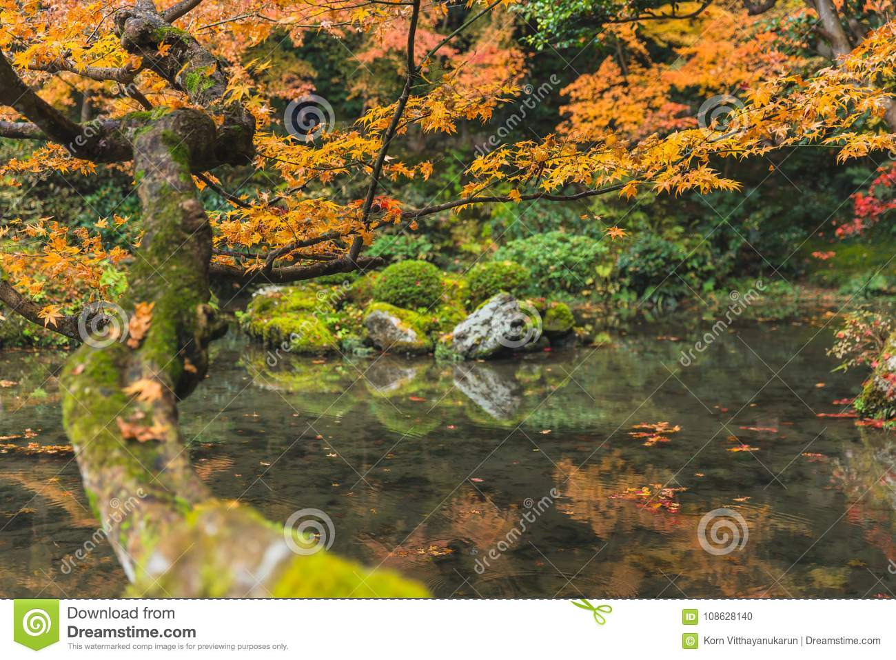 Autumn Maple Tree With Pond Lake Forest Garden In Kyoto Stock Photo ...