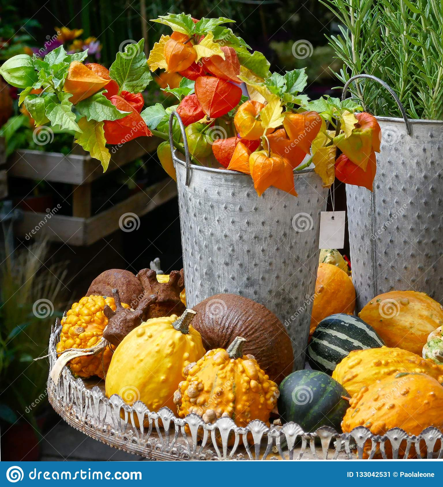 Autumn Natural Decoration com lanternas chinesas em uma cubeta e em umas cores das abóboras, as alaranjadas e as verdes