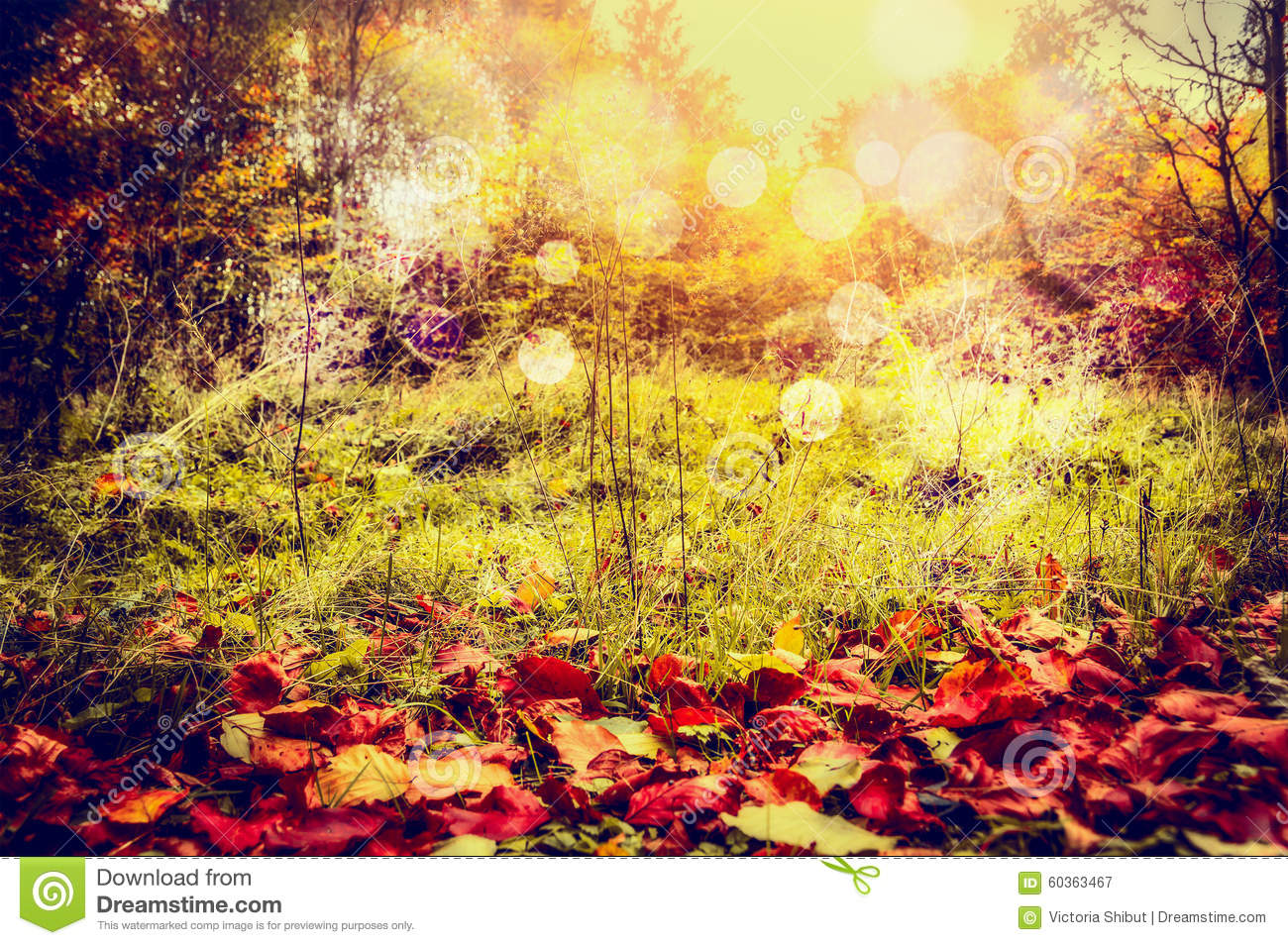 Autumn nature background with red fallen leaves, wild grass and trees bush with sun light and bokeh