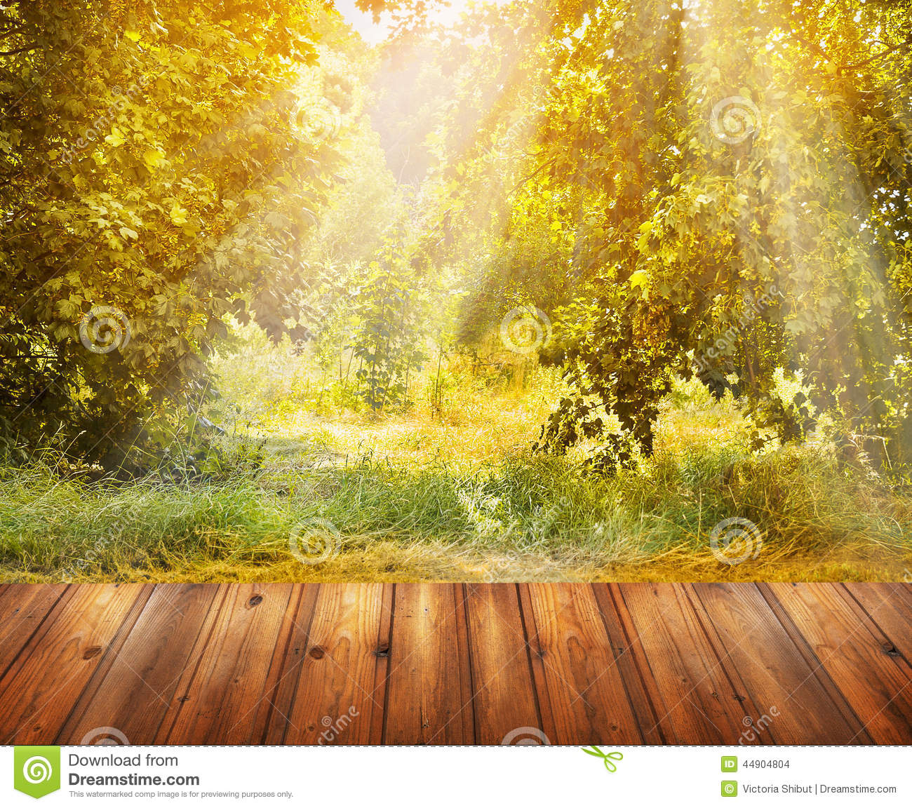 Autumn nature background with wooden terrace and fall tree for Terrace nature