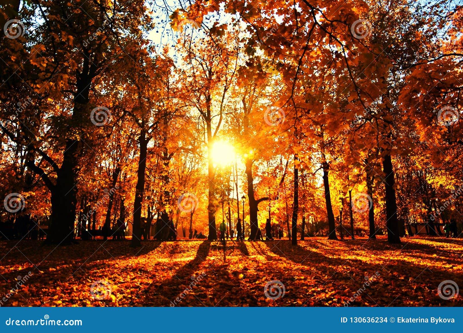 Autumn nature of Kolomenskoye park in Moscow.