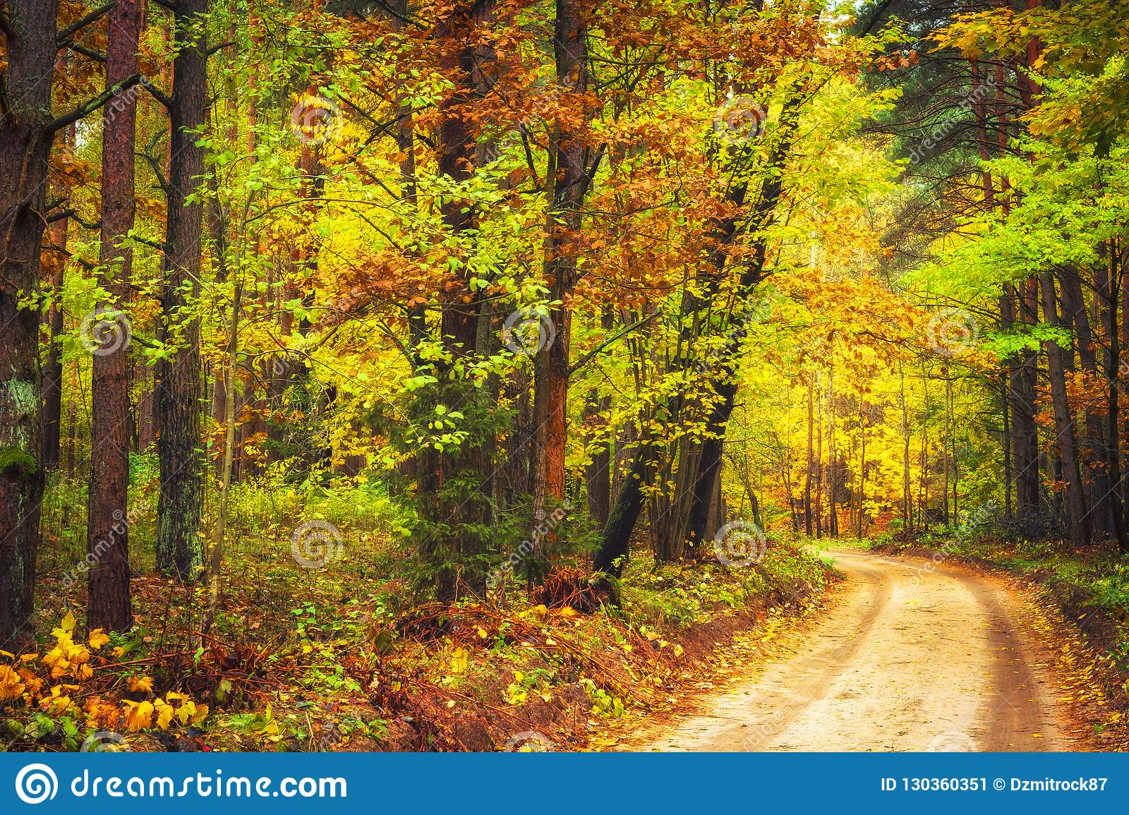 Autumn nature landscape. Colorful autumn forest with yellow trees along road. Path in woodland.