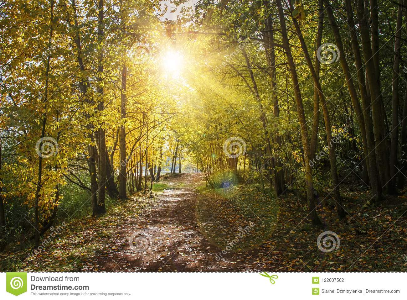 Autumn nature landscape with path in yellow forest. Sunlight in autumn park. Forest road under colorful trees. Scenery of nature