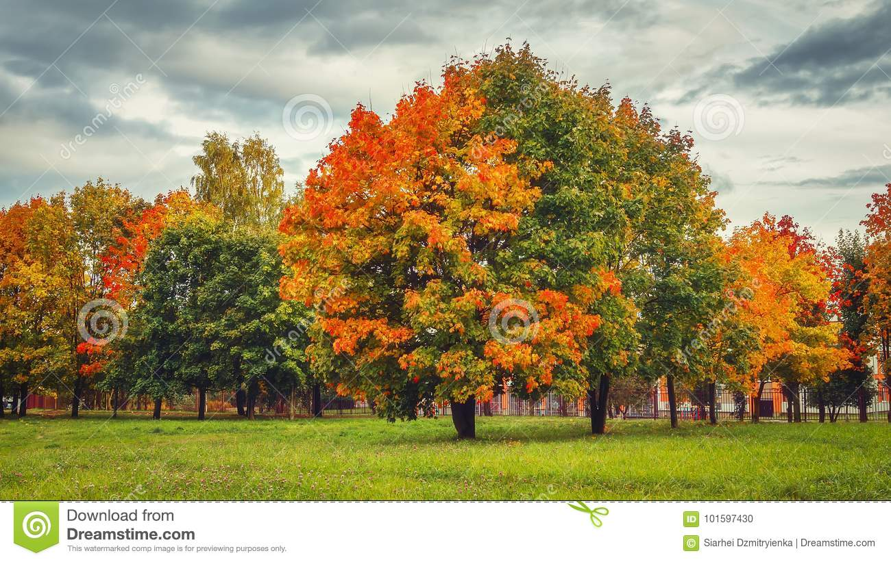 Autumn nature in park. Colorful trees in fall.