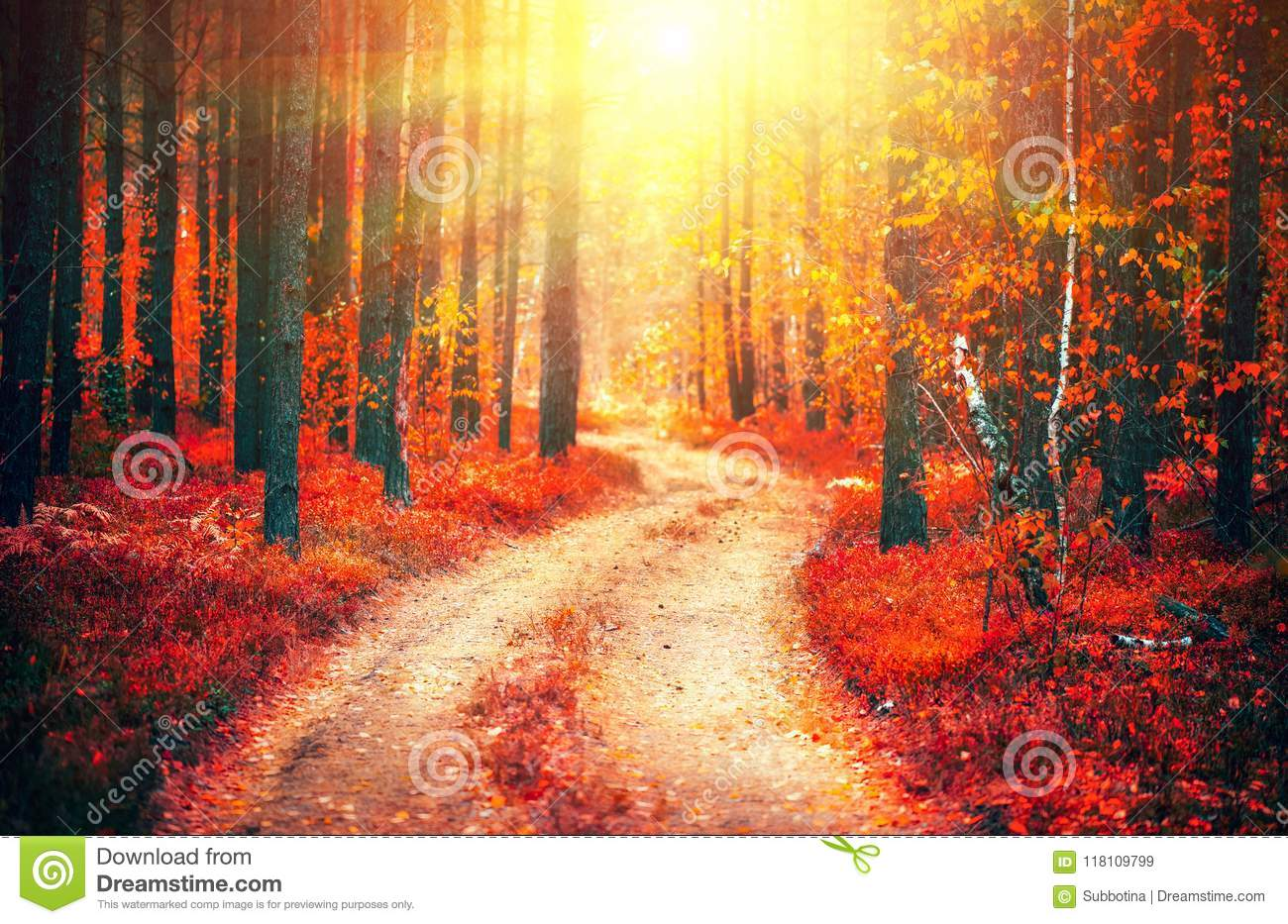 Autumn nature scene. Fantasy fall landscape. Beautiful autumnal park with pathway