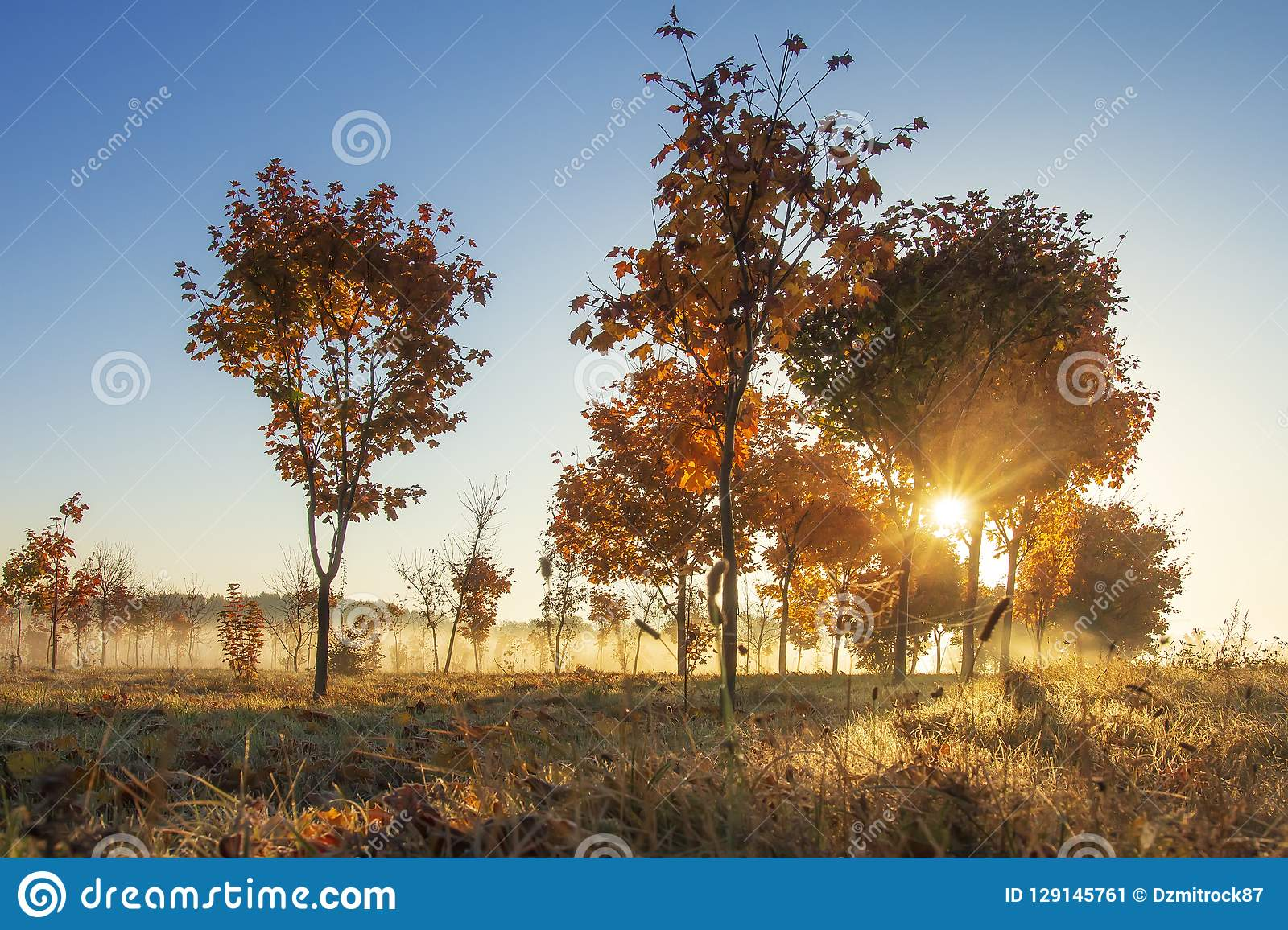 Autumn nature at sunrise on sunny clear morning. Yellow trees on colorful meadow in october