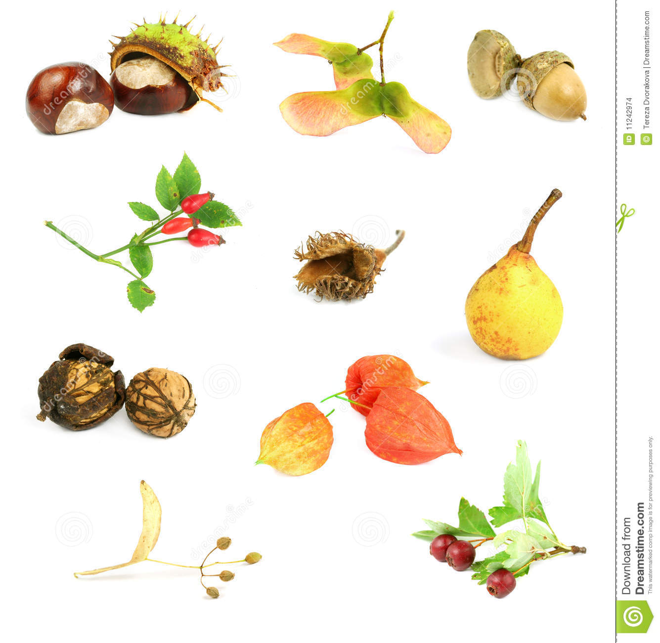 Autumn Nuts Seeds And Fruits Stock Images Image 11242974