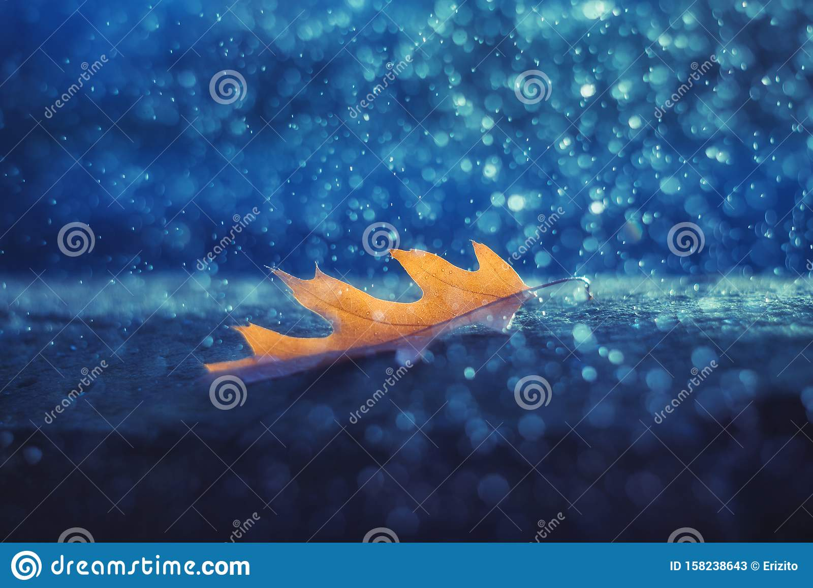Magic autumn blue background with yellow oak leaf