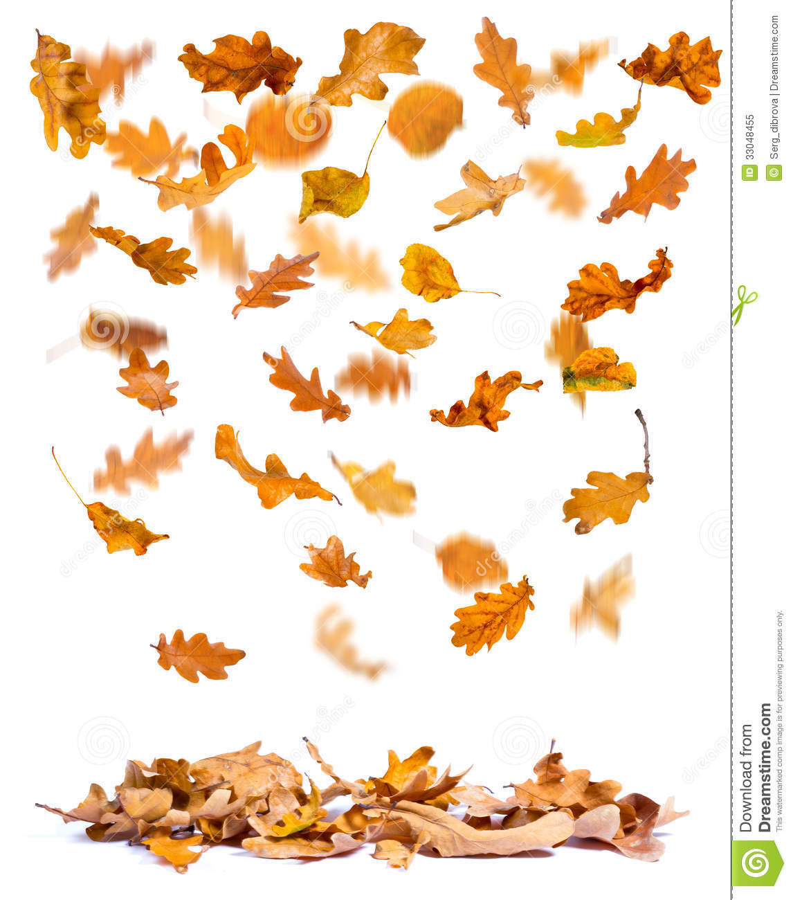 autumn oak leaves falling stock image image of fall falling leaves clip art animated gif falling leaves clipart animated