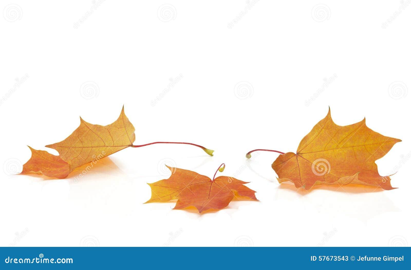Autumn odizolowane liście