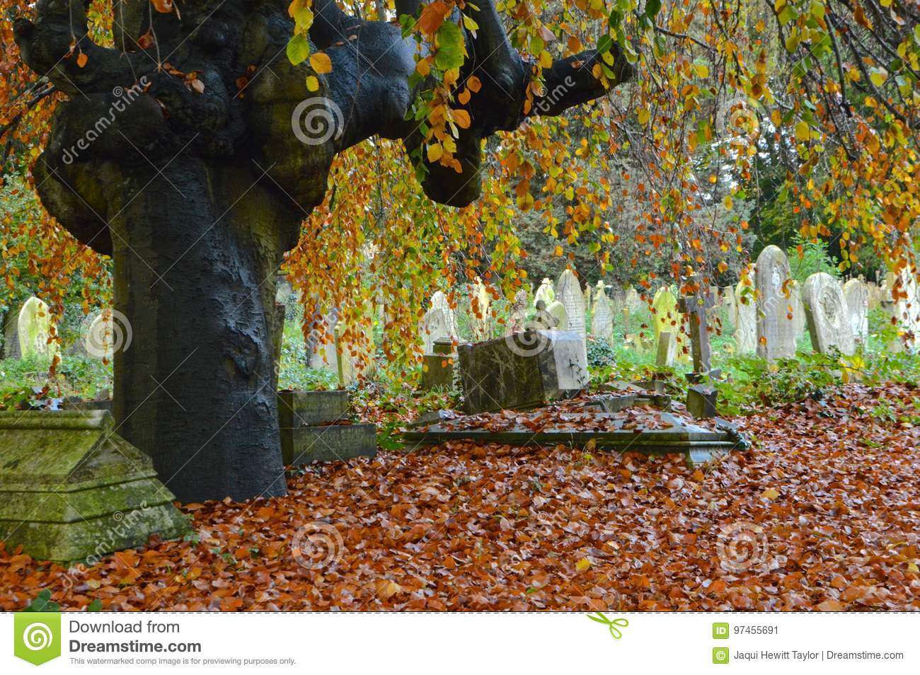 Autumn in the Old Cemetery Southampton