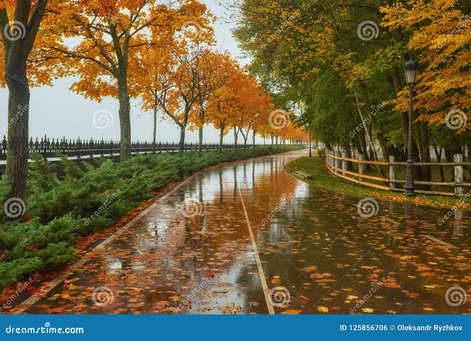 Autumn Park Rainy Background Autumn Landscape Background Rain