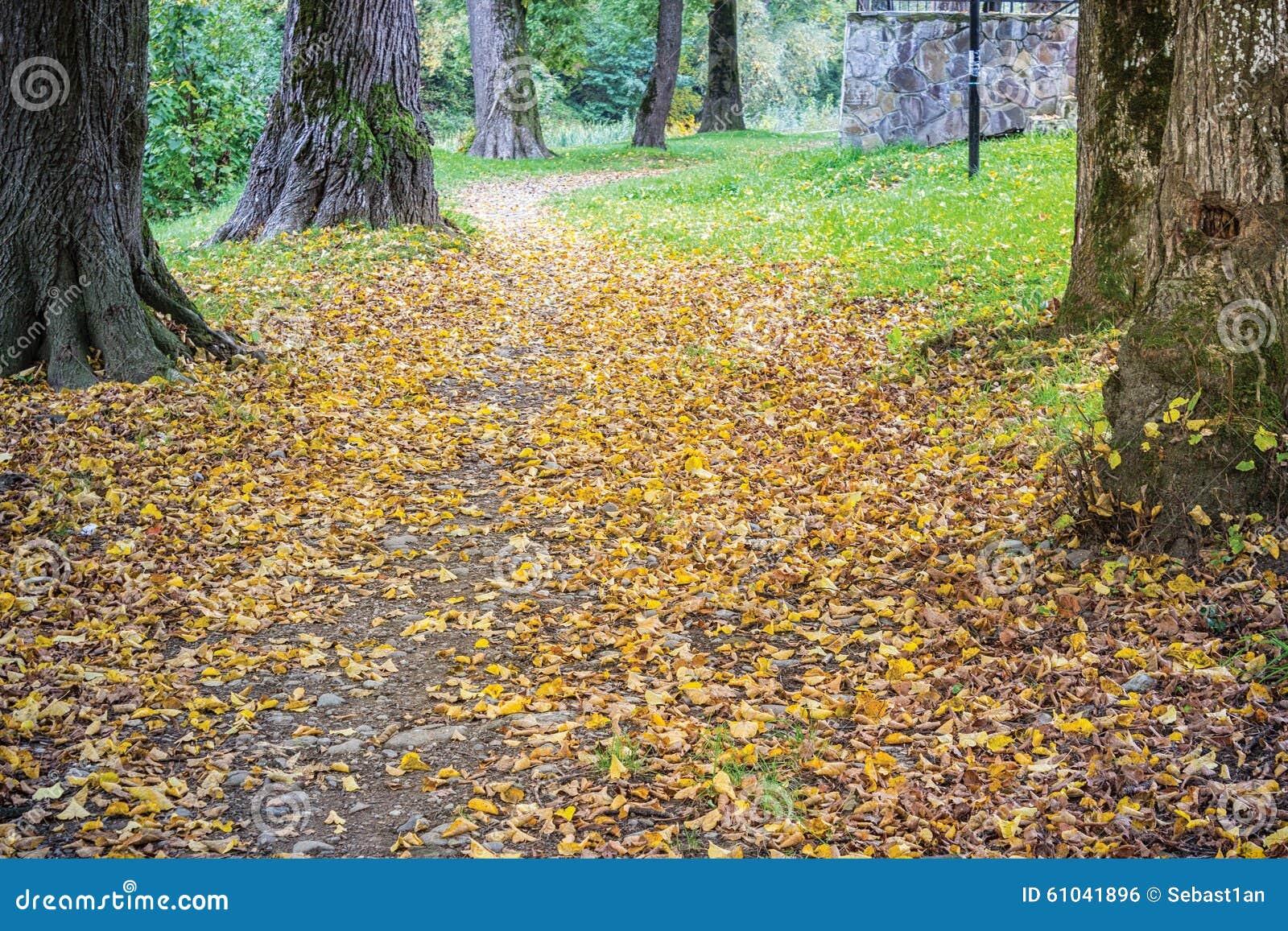 tree path track leaves - photo #41