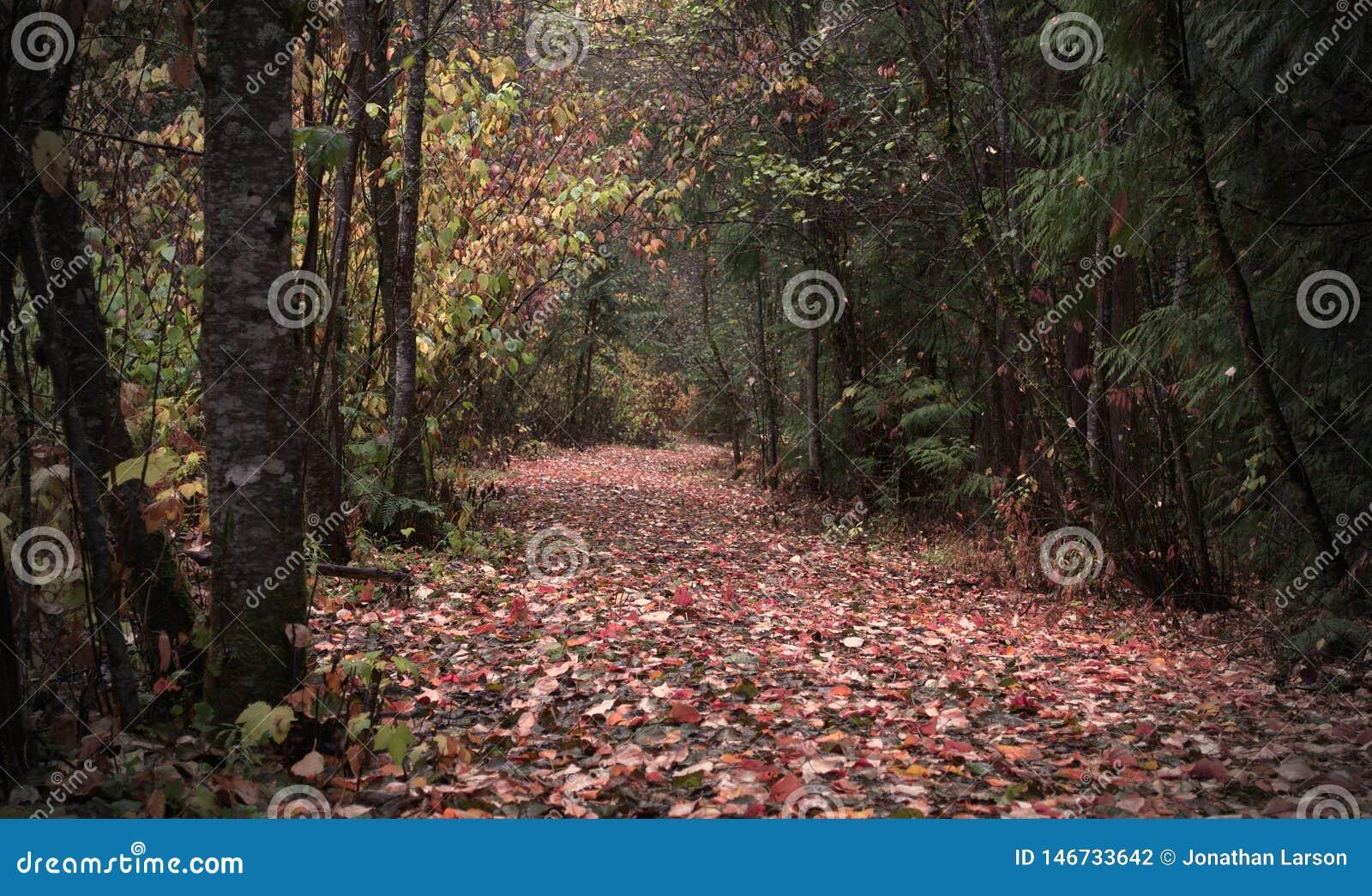 Autumn Path brilhante