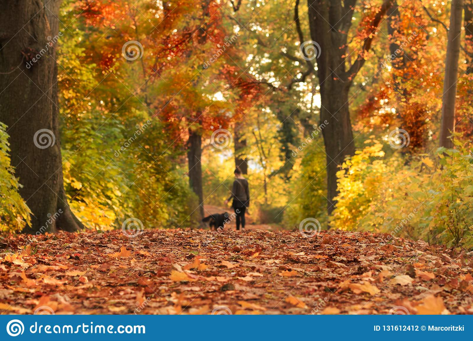 Autumn path with colored leaves