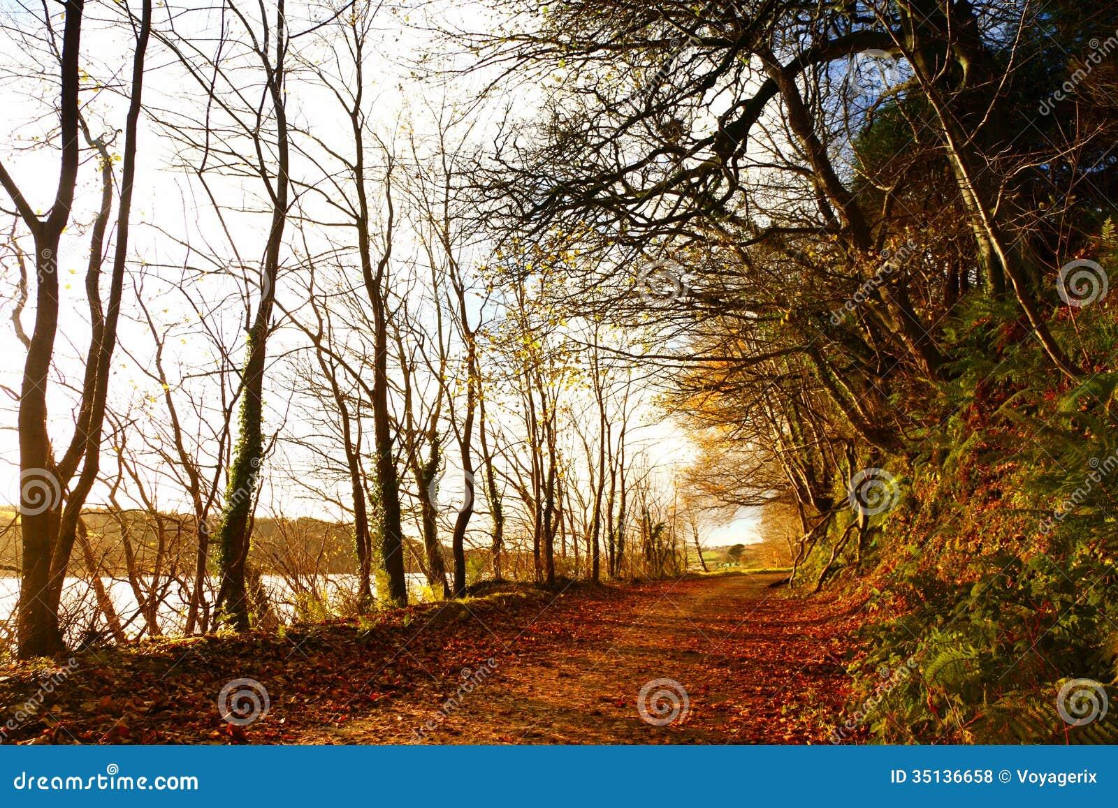 Autumn Pathway. Co.Cork Irland.