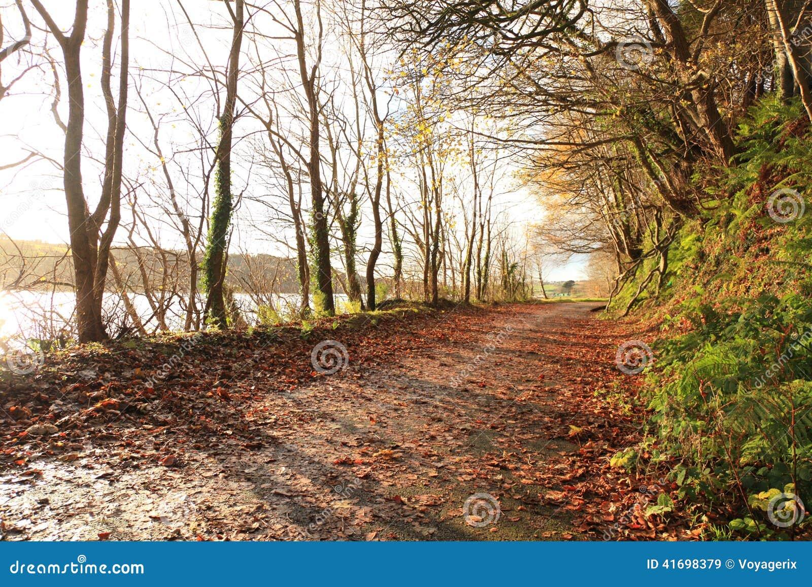 Autumn Pathway Co kork ireland