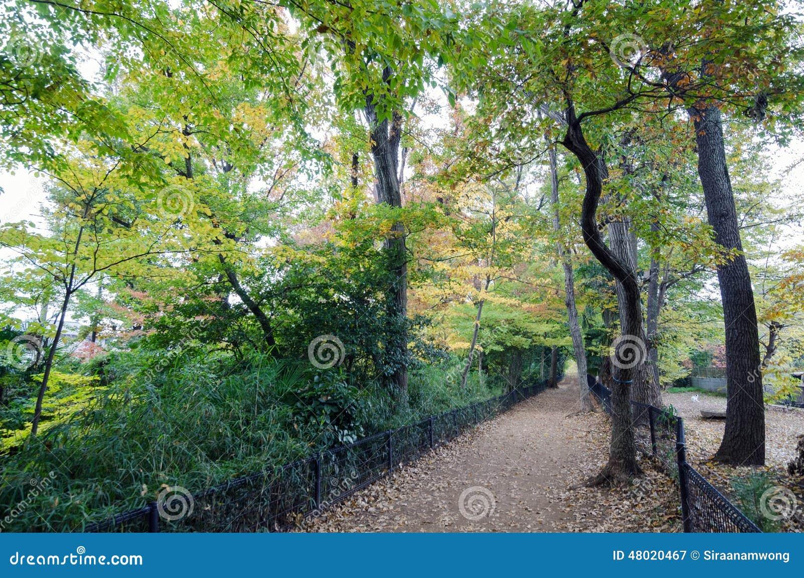 Autumn Pathway i skogen