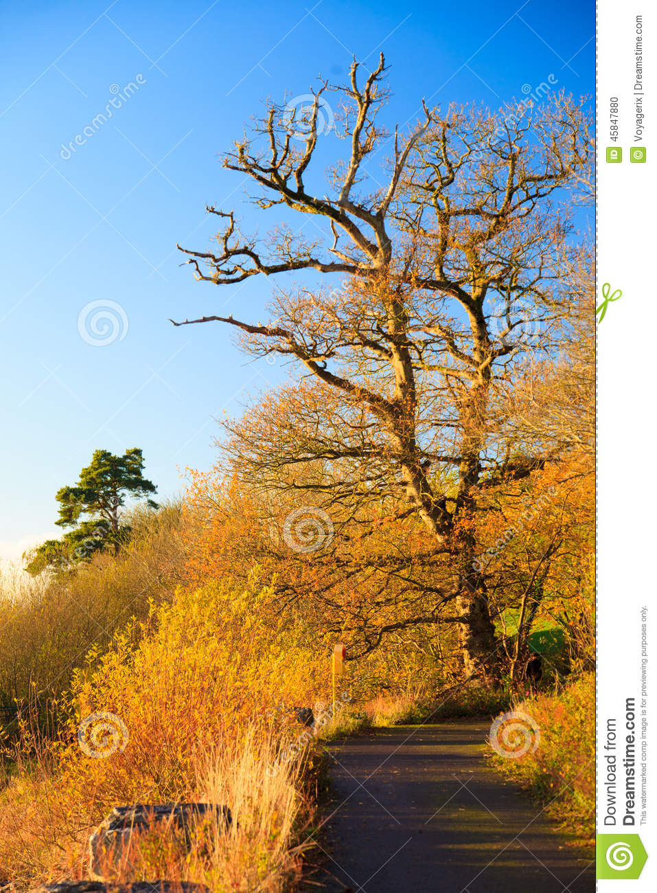 Autumn Pathway. Landscape with the autumnal trees.